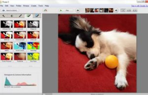 editing the pic of a dog